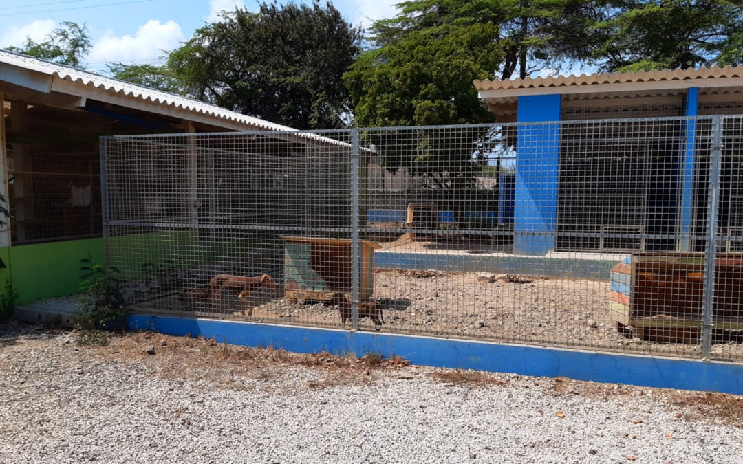 Verbouwing Puppy kennel Animal Shelter Bonaire